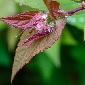 Flower buds in raindrops - Ellie Kennard 2014