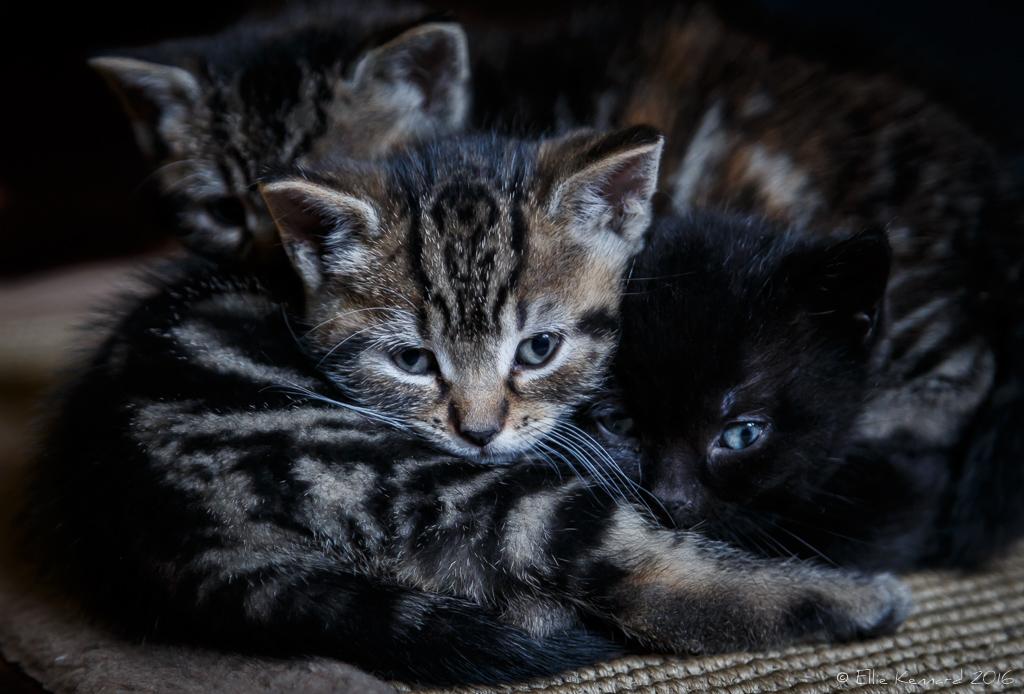 Happy International Kitten Day - Ellie Kennard 2016