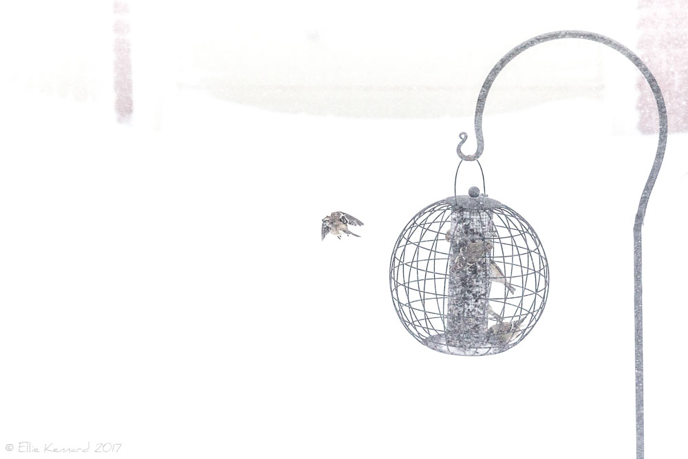 Leaving the feeder in the blizzard - Ellie Kennard 2017