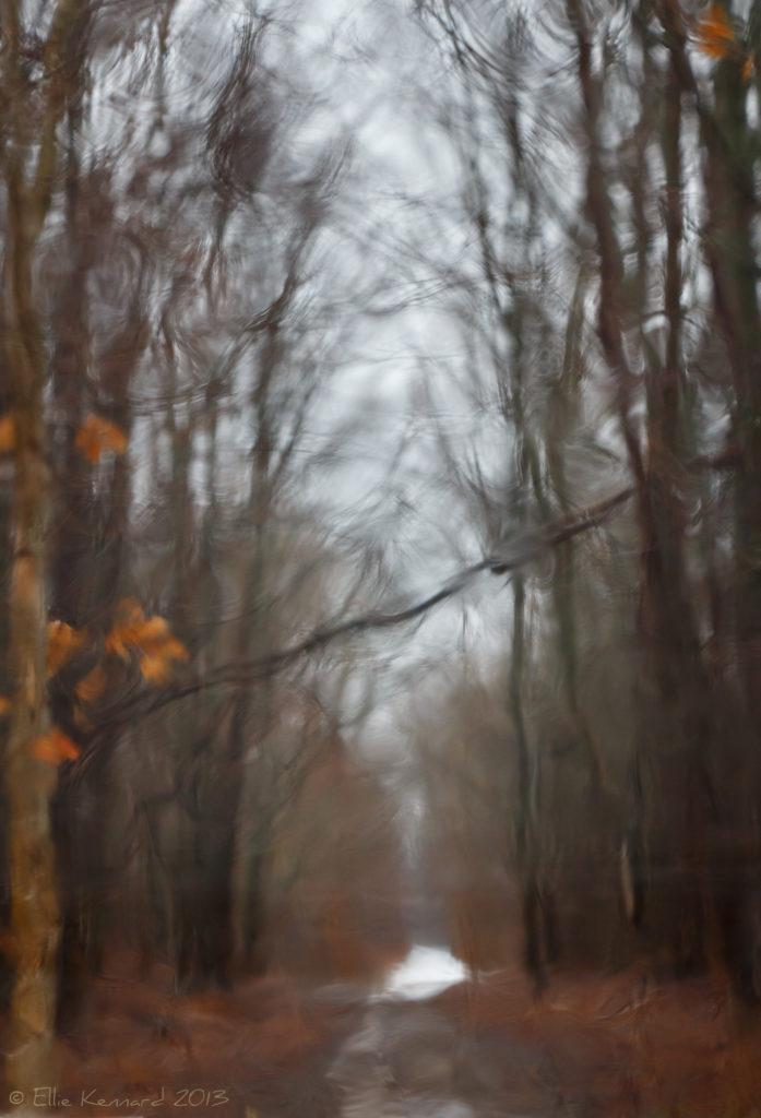 Rainy Day Path - Ellie Kennard 2014