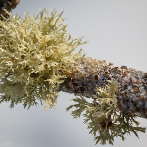 Lichen and fungal growth - Ellie Kennard 2014