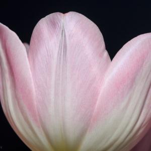 I wish for spring - Ellie Kennard 2014
