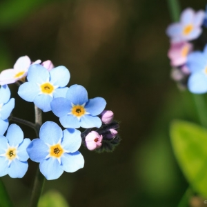 Forget Me Nots - Ellie Kennard 2014