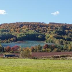 Delhaven hills in autumn - Ellie Kennard 2014