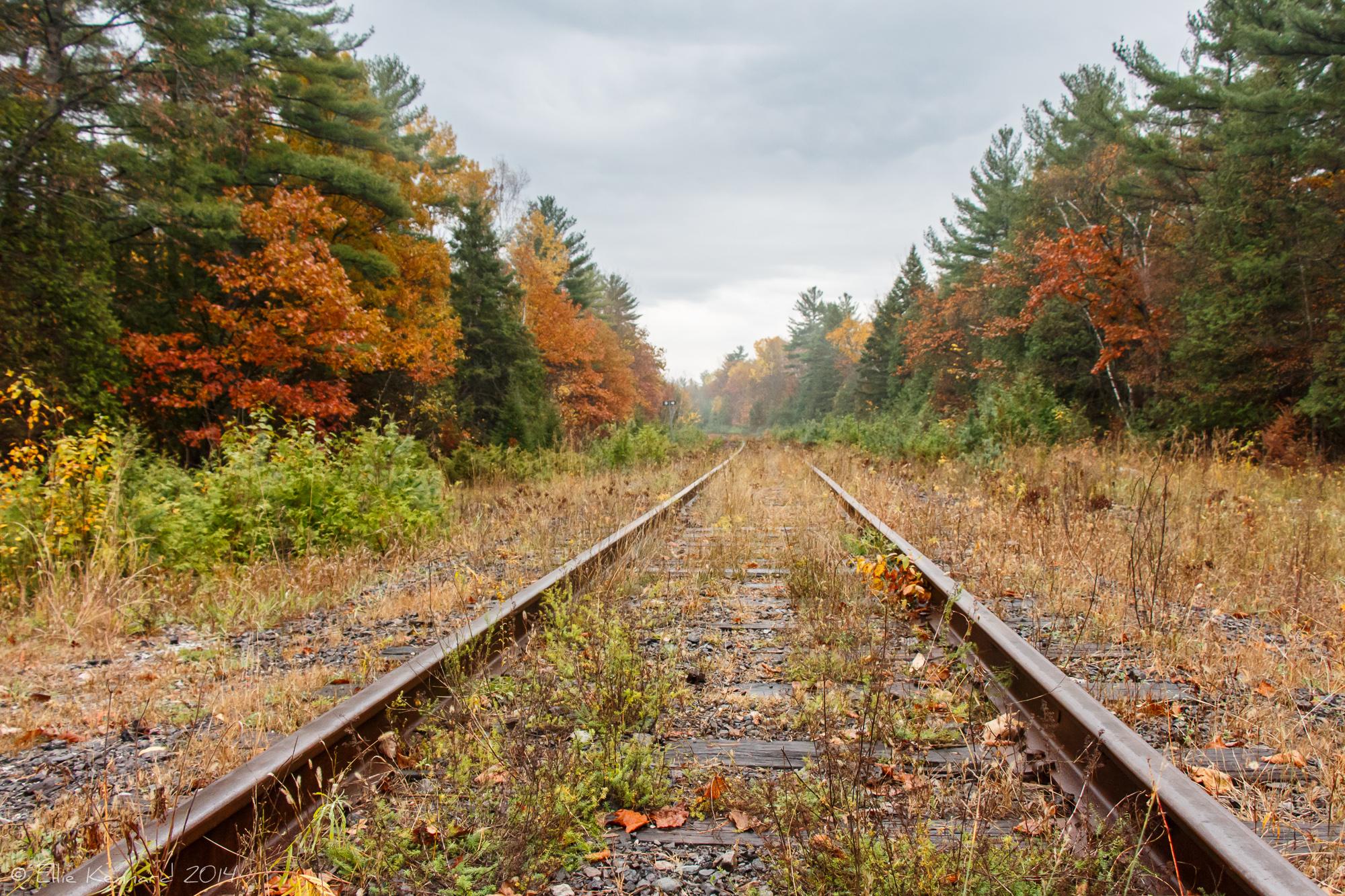 Train tracks in the fall, Photo by  Ellie Kennard 2013