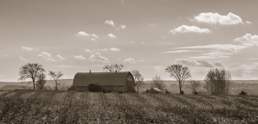 After the Harvest - Ellie Kennard 2012