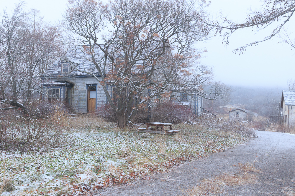 It was getting to be winter and dangerous for Martha to live there alone - photo Ellie Kennard 2015