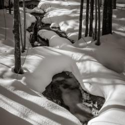 Snowy Woodland walk - Ellie Kennard 2016