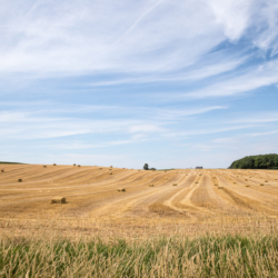 The Crops Safely Gathered in - Grand Pre Nova Scotia - Ellie Kennard 2016