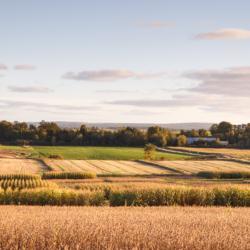 Experimental Crop Fields, Hillaton, Nova Scotia - Ellie Kennard