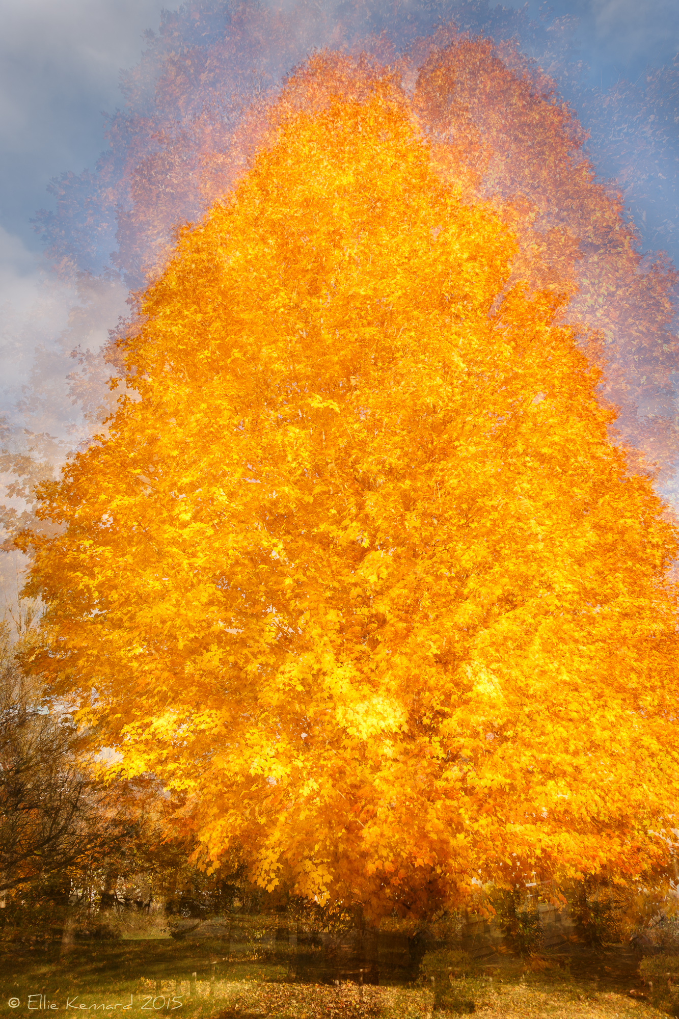 Fall Into a Blaze of Colour -  Ellie Kennard 2015