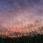 Dream of a country sunset - multiple exposure in camera - Ellie Kennard 2016