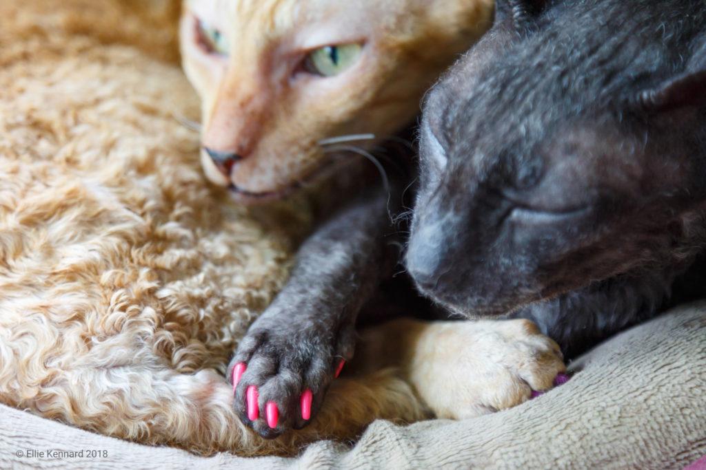 Molly's manicure- Ellie Kennard 2015