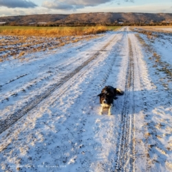 Joni never minds the cold of winter walks, as long as she has our company!