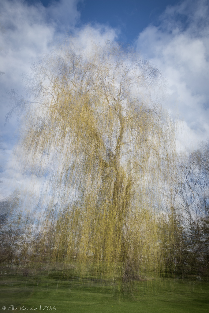 Weep Not For Me, Willow - Ellie Kennard Multiple exposure image