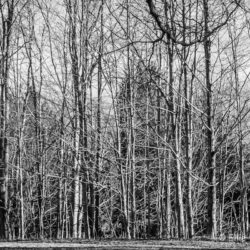 Trees in winter, late afternoon - Ellie Kennard 2012