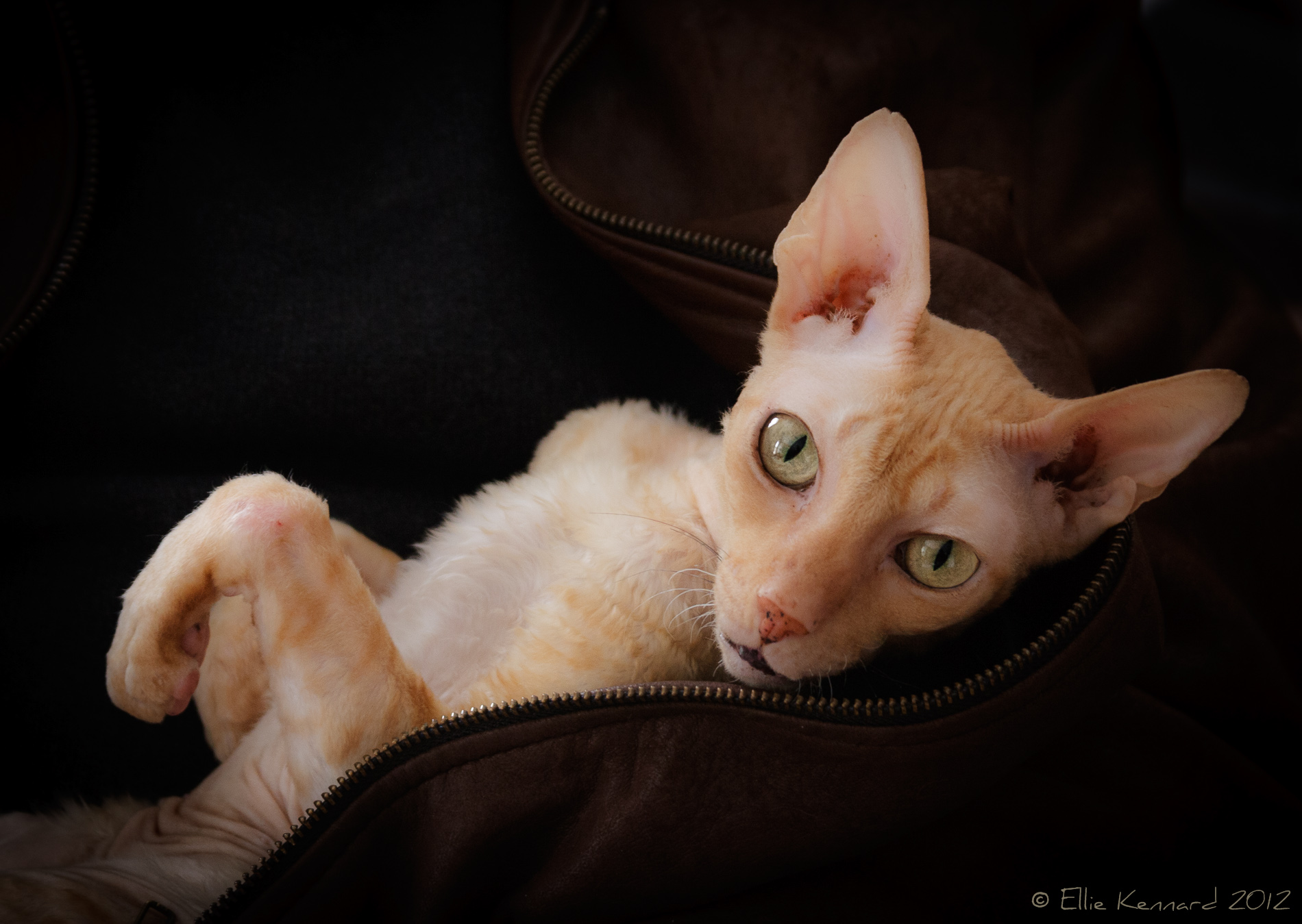 "Rupert - ""I think leather suits me, do you?"" - Ellie Kennard 2012"